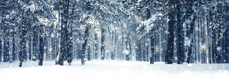 Zima wakacje tło, natury sceneria z błyszczącym śniegiem i zimna pogoda w lesie przy Bożenarodzeniowym czasem, zdjęcie stock