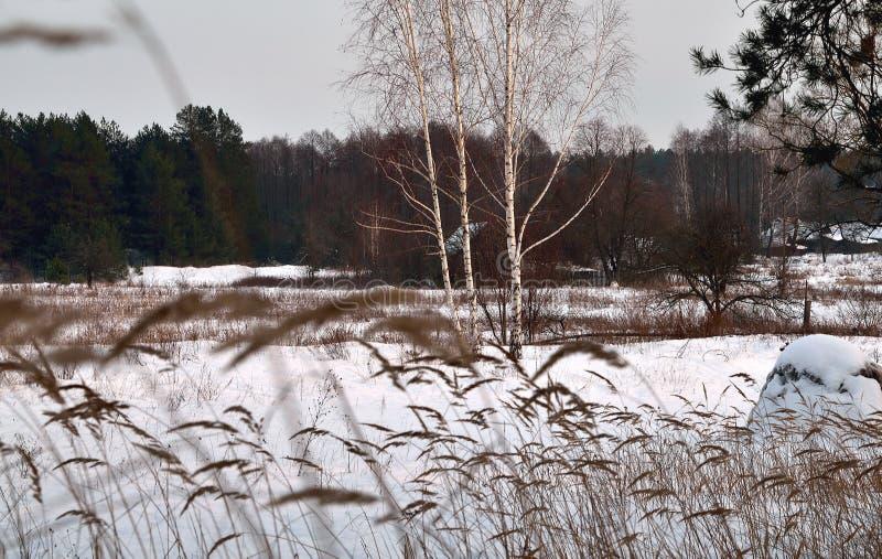Zima więdnął trawy, porzucający domy na krawędzi pierwszych planów zdjęcie stock