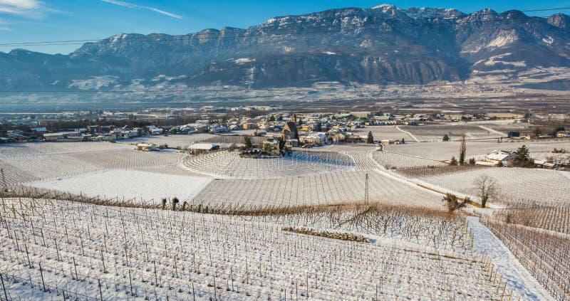 Zima winniców krajobraz, zakrywający z śniegiem (śnieżny producent) Trentino Altowy Adige, Włochy Główni ekonomiczni czynniki są  fotografia royalty free