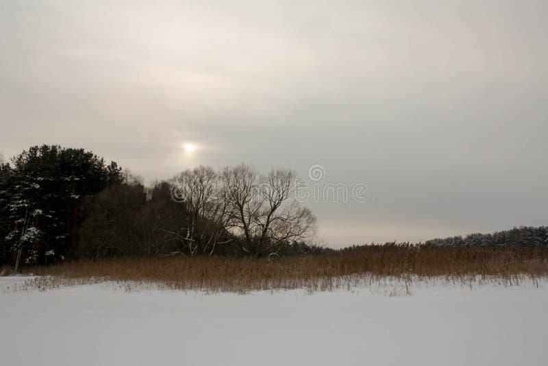 Zima z udziałami śnieg w Rosyjskim lesie fotografia stock