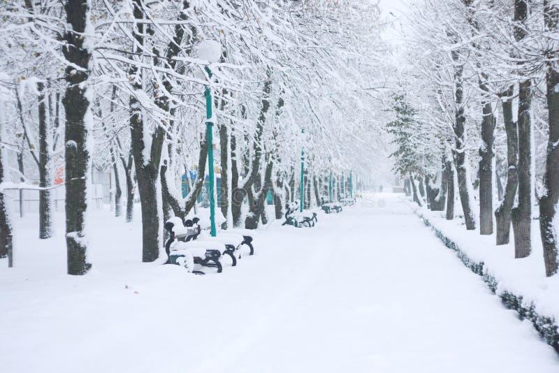 Zima zimny dzień w parku Śnieżyści drzewa i ławki w miasto parku Drzewny wyrównanie w zimy parkland obrazy royalty free