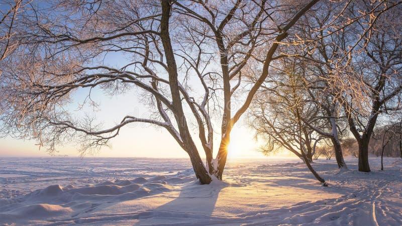 Zima Zimy natura z jaskrawym ranku słońcem Mro?ni drzewa w ?wietle s?onecznym abstrakcjonistycznych gwiazdk? t?a dekoracji projek obraz royalty free