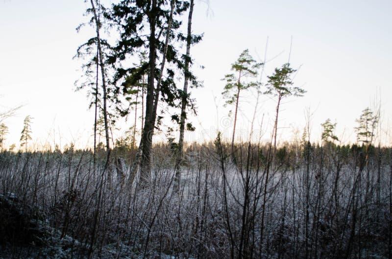 Zima zmierzch od lasowego widoku na polu, Otanki, Latvia zdjęcie royalty free