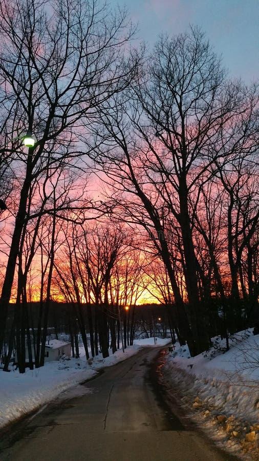Zima zmierzch Przez Nagich Dębowych drzew obraz royalty free