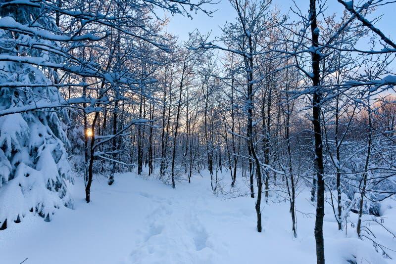 Zima zmierzchu śnieżni drzewa obrazy royalty free