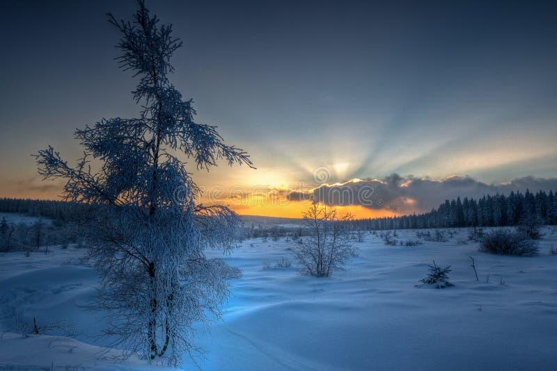 Zima zmierzchu śnieżni drzewa obraz royalty free