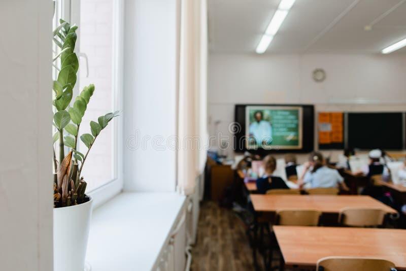 Zimmerpflanze in einem Topf im Klassenzimmer stockfotos