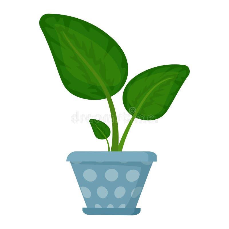 Zimmerpflanze im Blumentopf Dekorativer Innenhouseplant Büro und Zimmerpflanze vektor abbildung