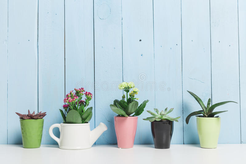 Zimmerpflanzen, Succulents lizenzfreie stockfotos