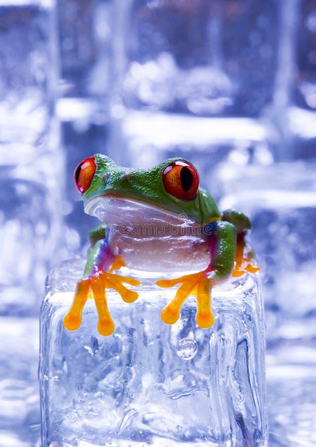 zimna żaba fotografia royalty free
