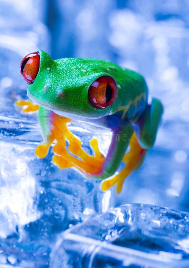 zimna żaba zdjęcie stock
