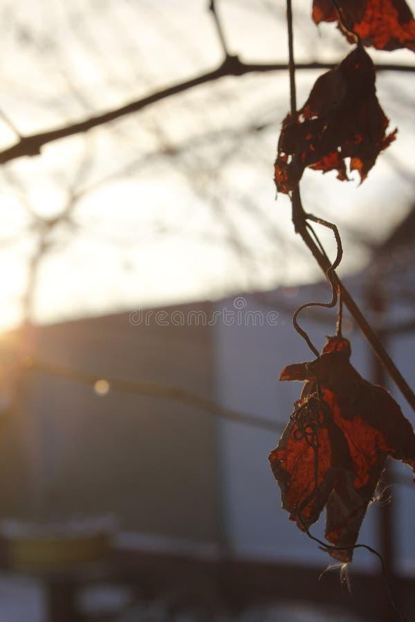 Zimna jesień zdjęcie stock