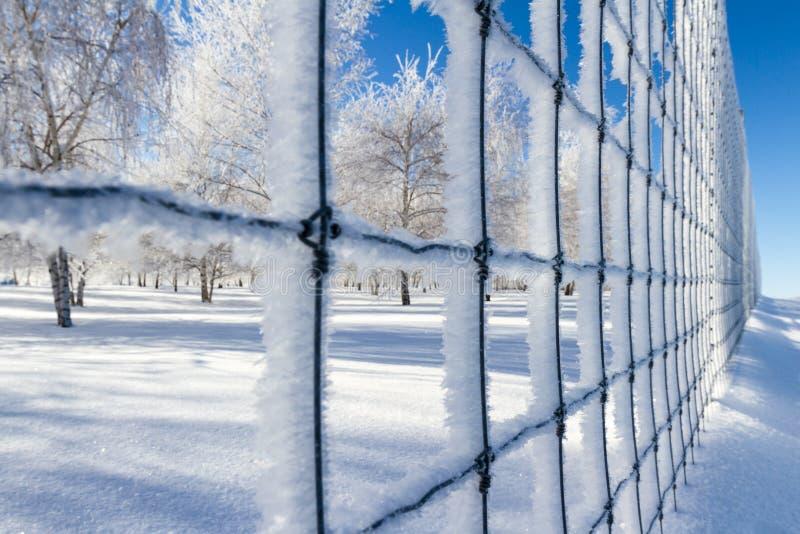 Zimna zimy scena fotografia stock