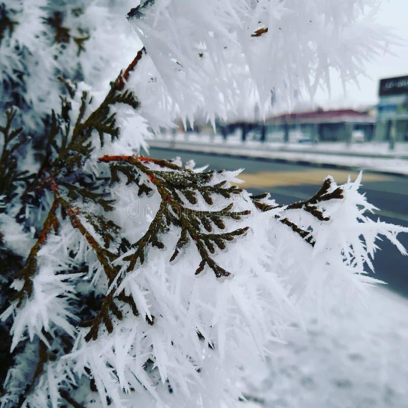 Zimne zimy w Vladikavkaz zdjęcia stock
