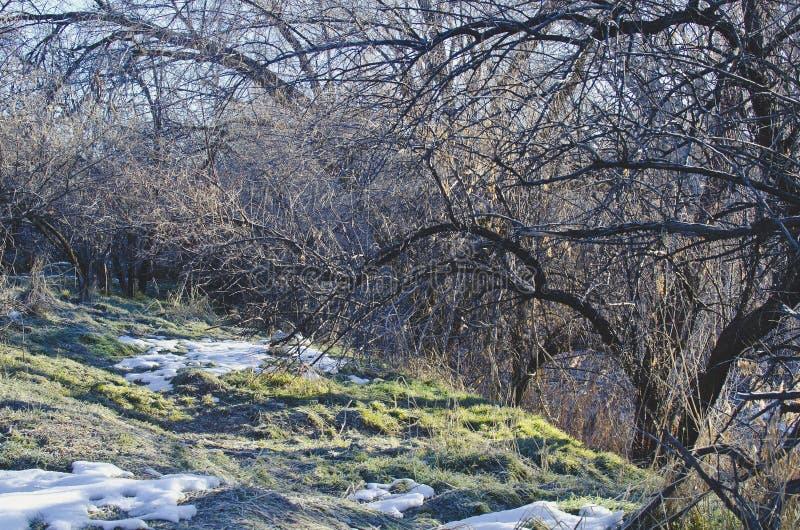 Zimni forsty drzewa w parku zdjęcie stock