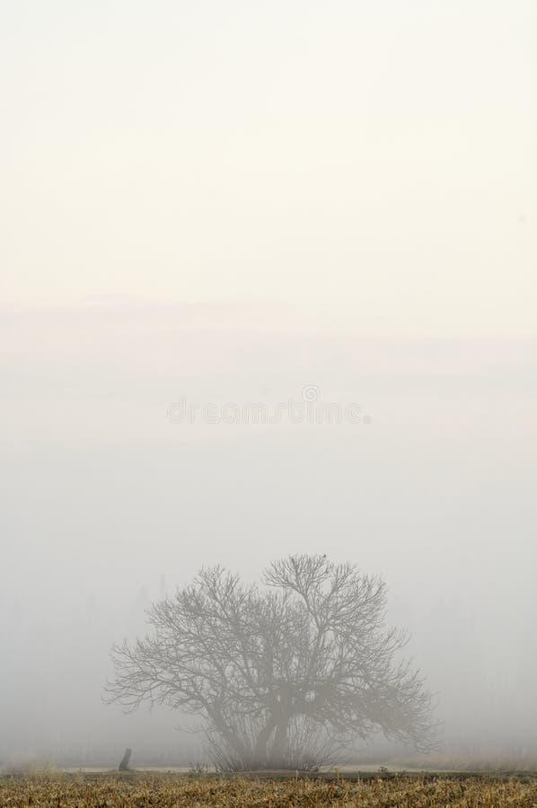 zimno świt fotografia stock