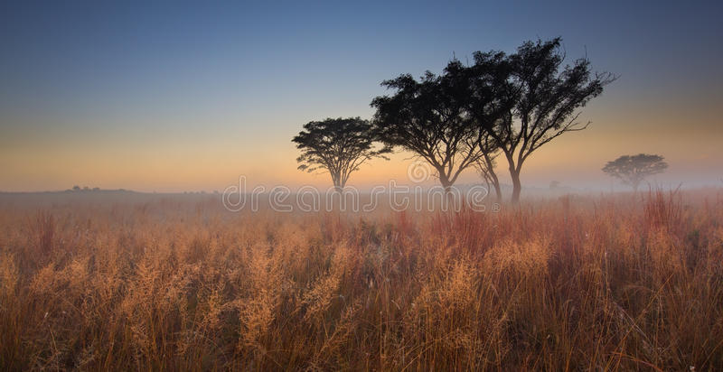 Zimny bezchmurny ranku wschód słońca z drzewami, brown trawą i mgłą, obrazy royalty free