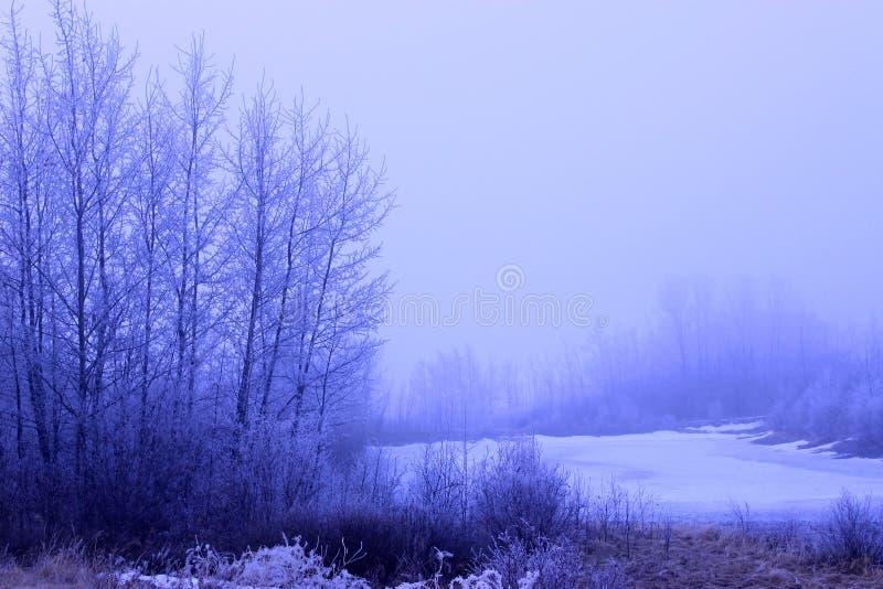 Zimny Foggey zimy ranku krajobraz Z Zamarzniętym jeziorem obrazy royalty free