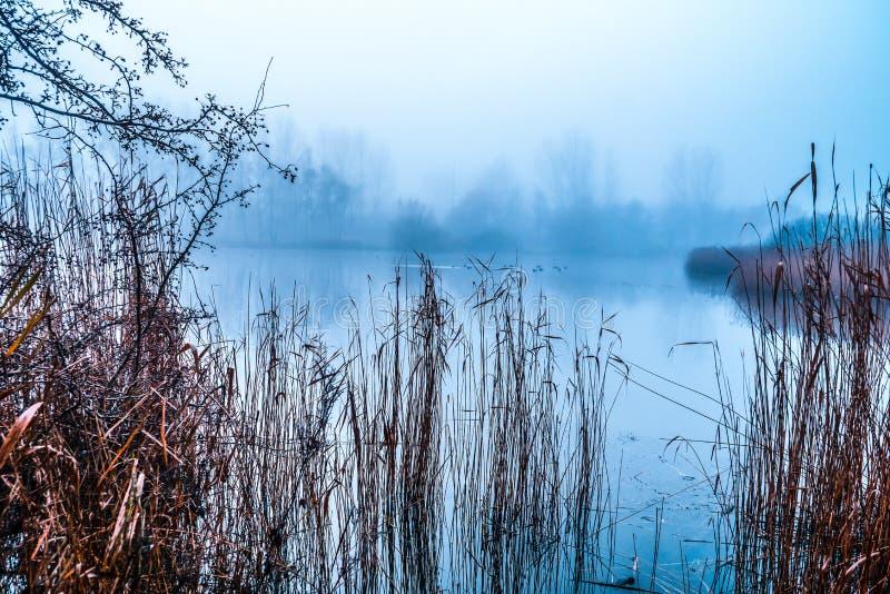 Zimny jesień ranek jeziorem zdjęcia royalty free