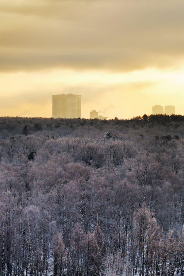 Zimny koloru żółtego świt nad miasto parkiem w zimie obrazy stock