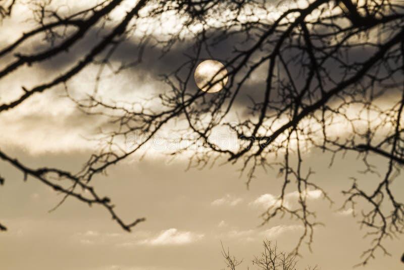 Zimny zima dzień w burzowej sylwetce drzewo i niebie obrazy royalty free