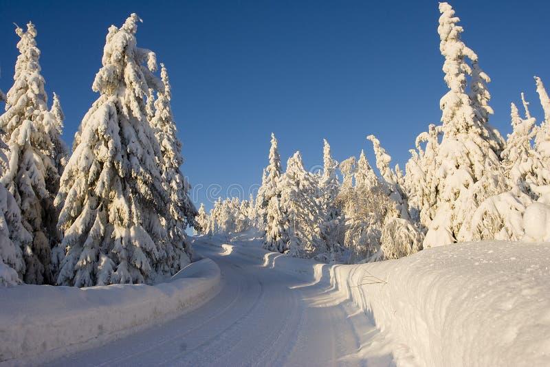 zimowa kraina czarów laponii zdjęcie royalty free