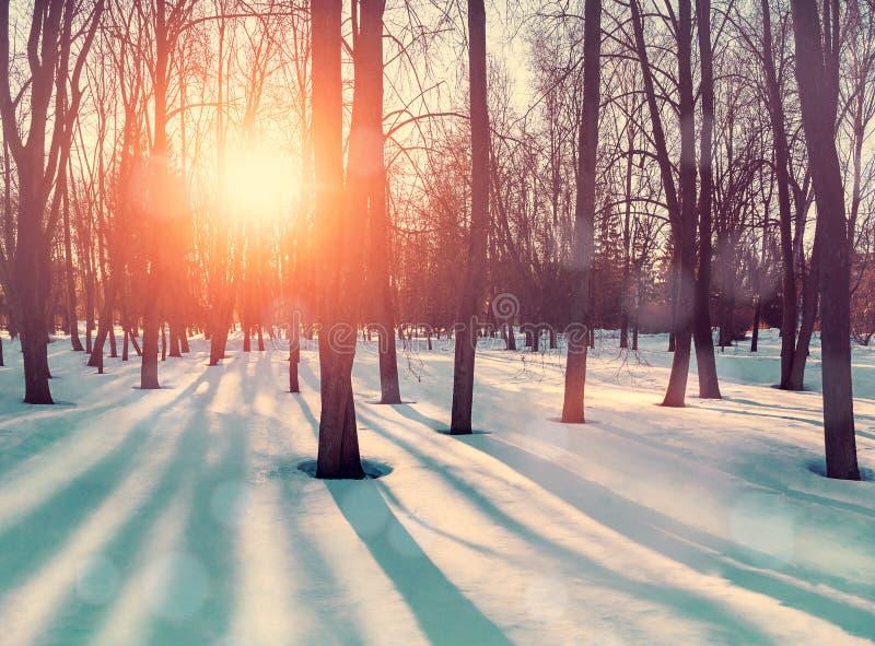 Zimowy krajobraz z śnieżnymi drzewami zimowymi i śniegiem w parku Miejscowość parku zimowego obrazy royalty free