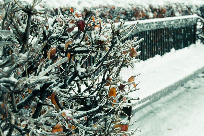 Zimy ławka obraz stock