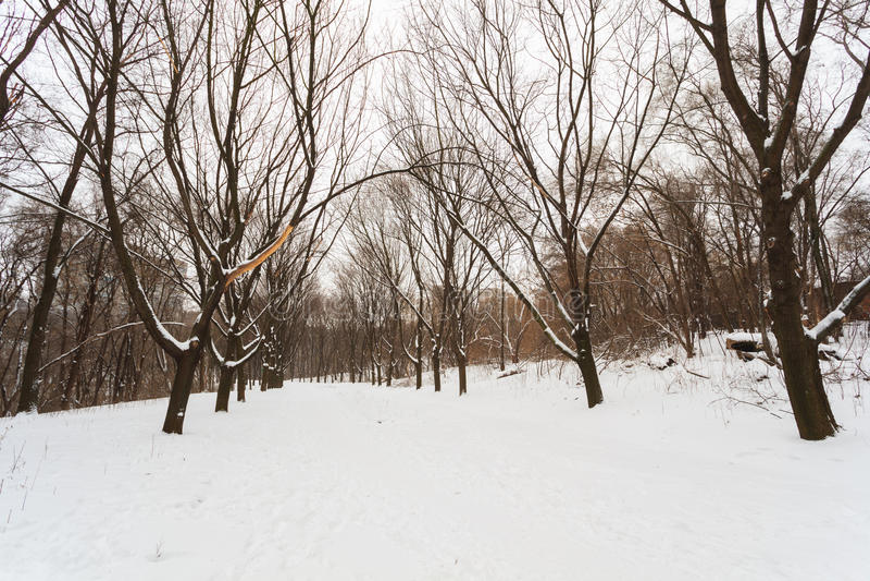Zimy ścieżka w parku zdjęcia stock