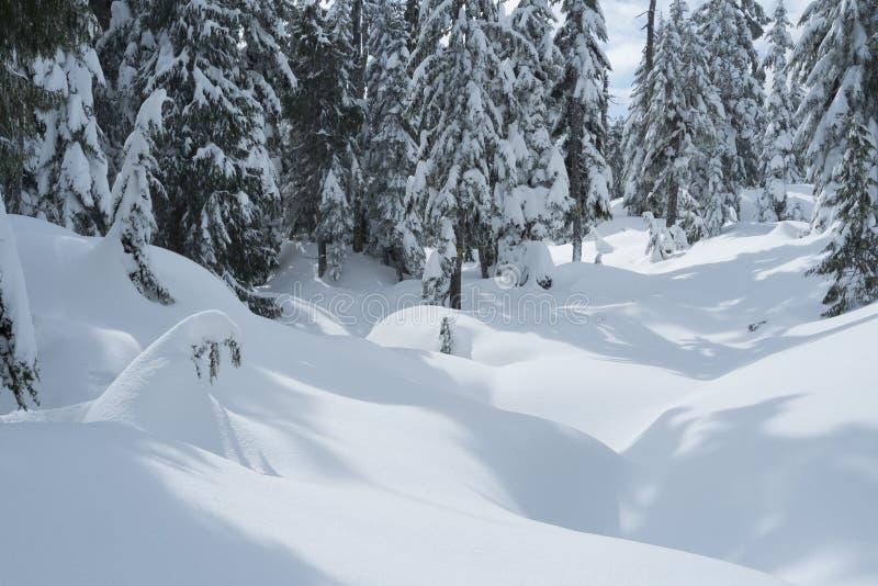Zimy śnieżna scena z śniegi zakrywającymi drzewami na góry Seymour ` s psa Halnej podwyżce obraz stock