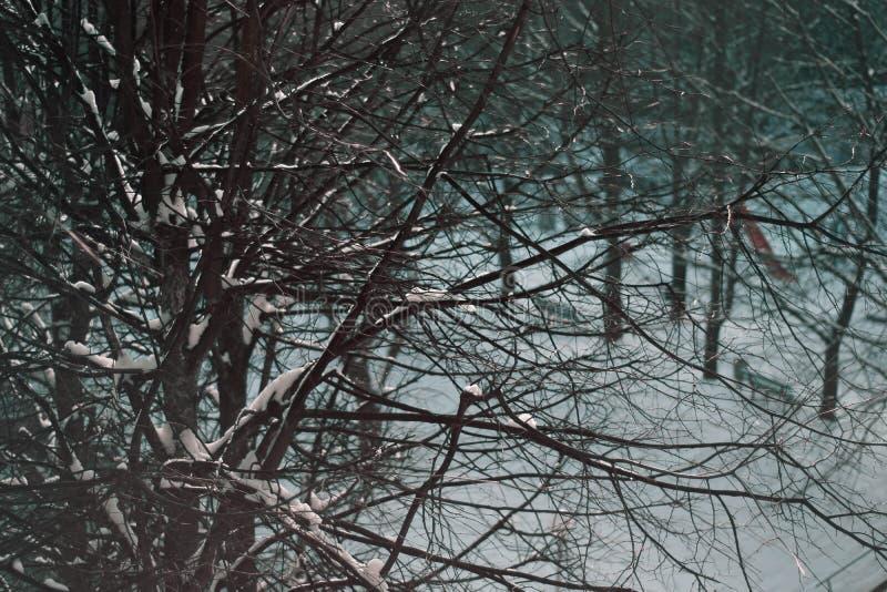 Zimy śnieżny drzewny tło zdjęcia royalty free