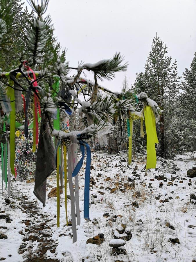Zimy śnieżny drzewo życzenia z dołączającym barwionym faborku szamanu drzewem zdjęcia stock