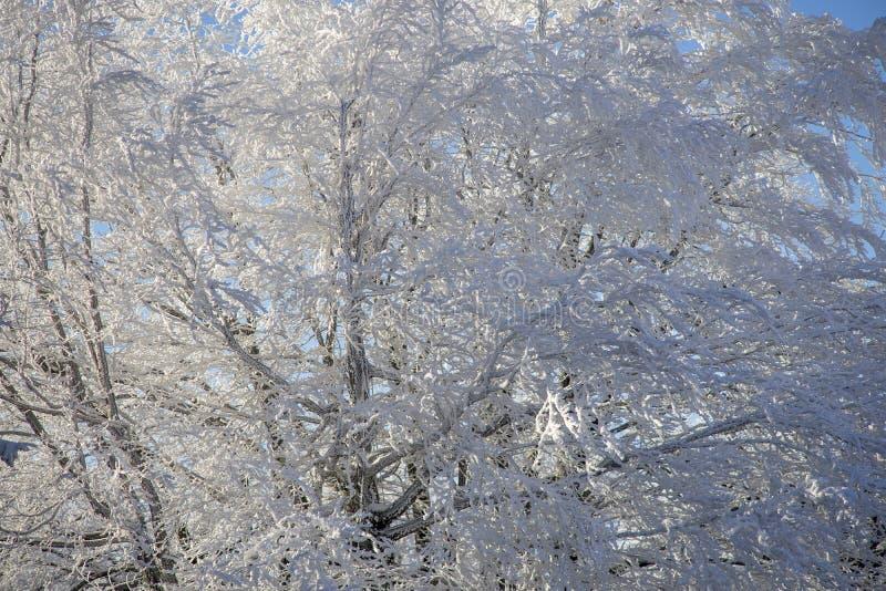 Zimy światło słoneczne fotografia royalty free