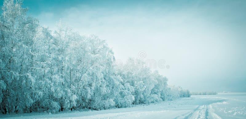 Zimy bajka zdjęcie royalty free