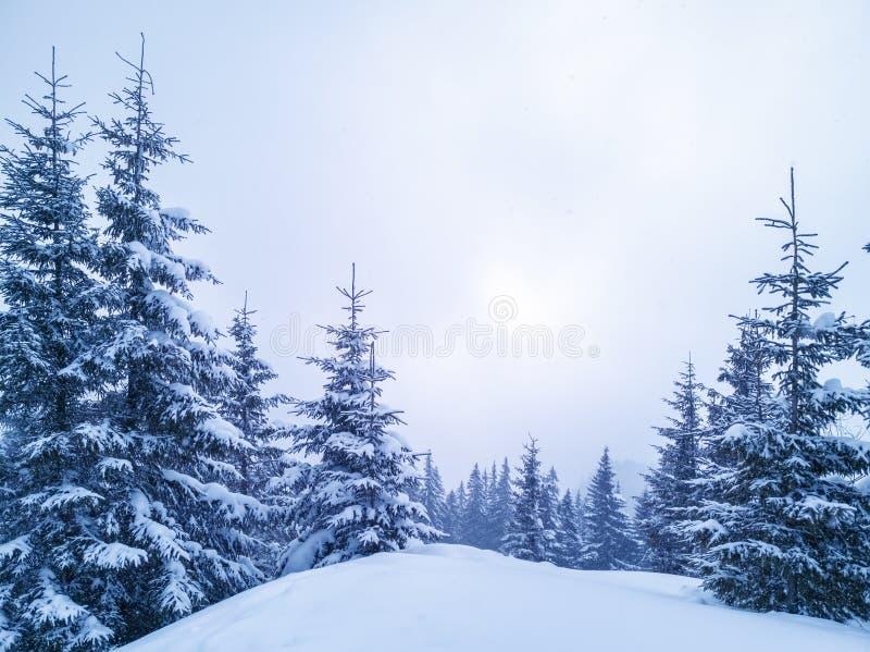 Zimy Bożenarodzeniowy sceniczny tło z kopii przestrzenią Śniegu krajobraz z świerczyn gałąź zakrywać z śniegiem zdjęcie royalty free