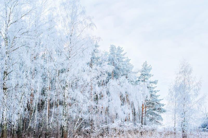 Zimy Bożenarodzeniowy sceniczny tło z kopii przestrzenią Śniegu krajobraz z drzewami zakrywającymi z śniegiem na otwartej przestr zdjęcie stock