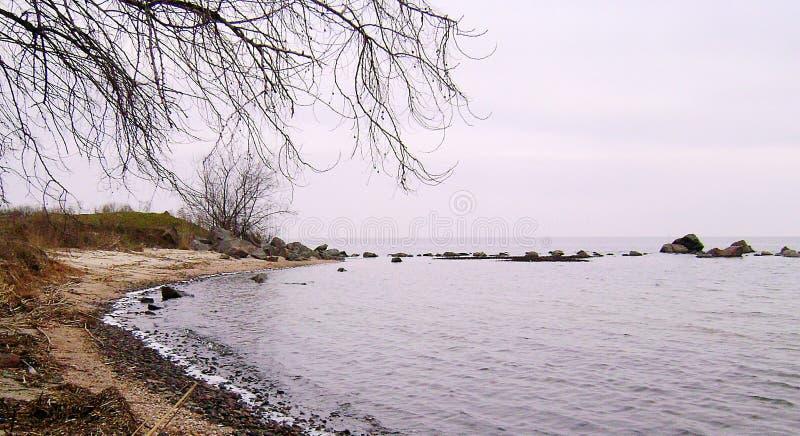 Zimy Czarny morze Gałąź drzewo nad nawadniają czarny morze Linia brzegowa piaskowata plaża na chmurnym dniu obraz royalty free