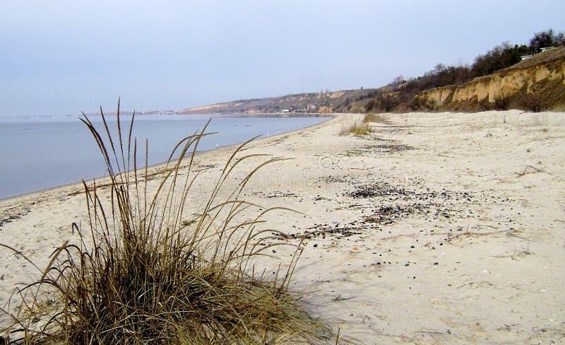 Zimy Czarny morze Gałąź drzewo nad nawadniają czarny morze Linia brzegowa piaskowata plaża na chmurnym dniu zdjęcia stock