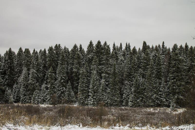Zimy drewno zdjęcie royalty free