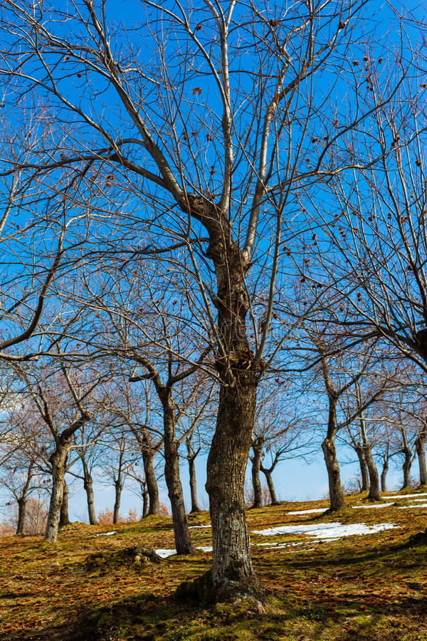 Zimy drzewo fotografia stock