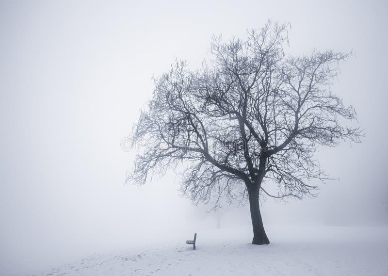 Zimy drzewo w mgle obrazy royalty free