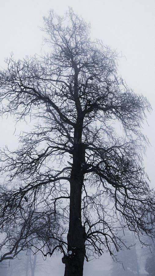 Zimy drzewo w mgle obrazy stock