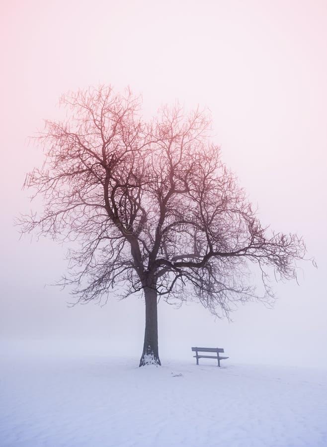 Zimy drzewo w mgle przy wschodem słońca obraz stock