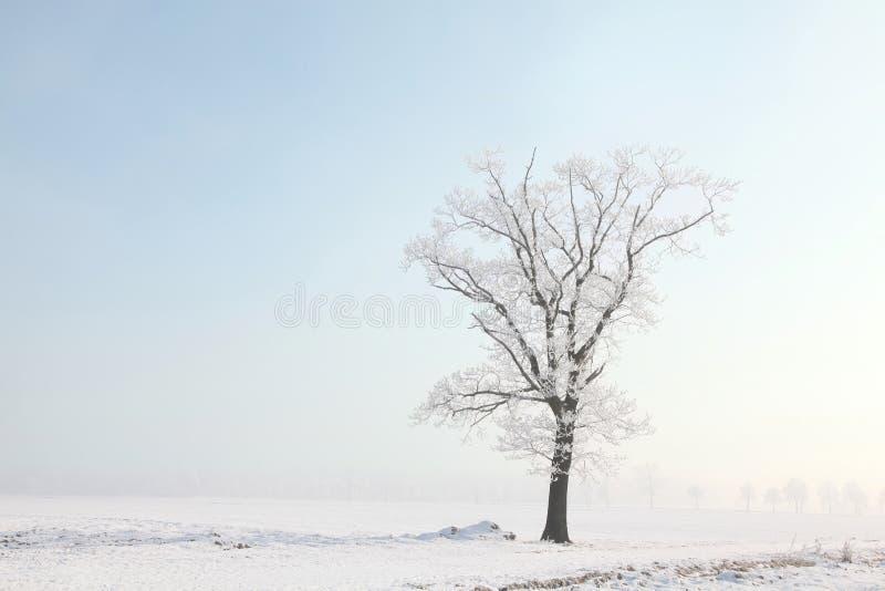 Zimy drzewo w polu przeciw niebieskiemu niebu obrazy royalty free