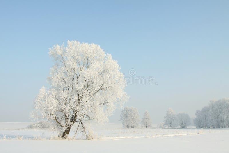 Zimy drzewo w polu przeciw niebieskiemu niebu obrazy stock