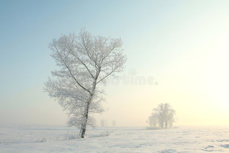 Zimy drzewo w polu przeciw niebieskiemu niebu zdjęcia royalty free