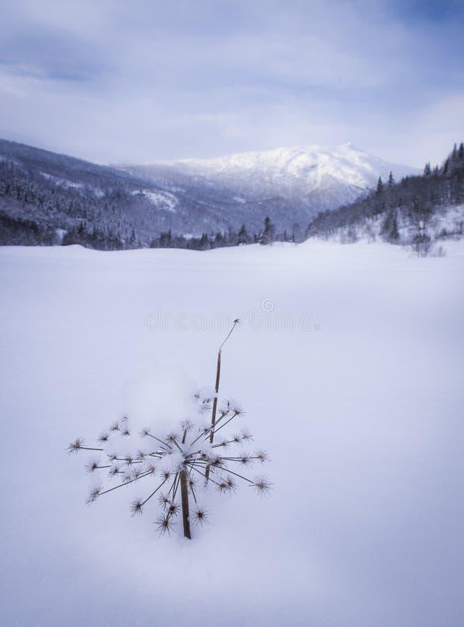 Zimy góry krajobraz obraz stock