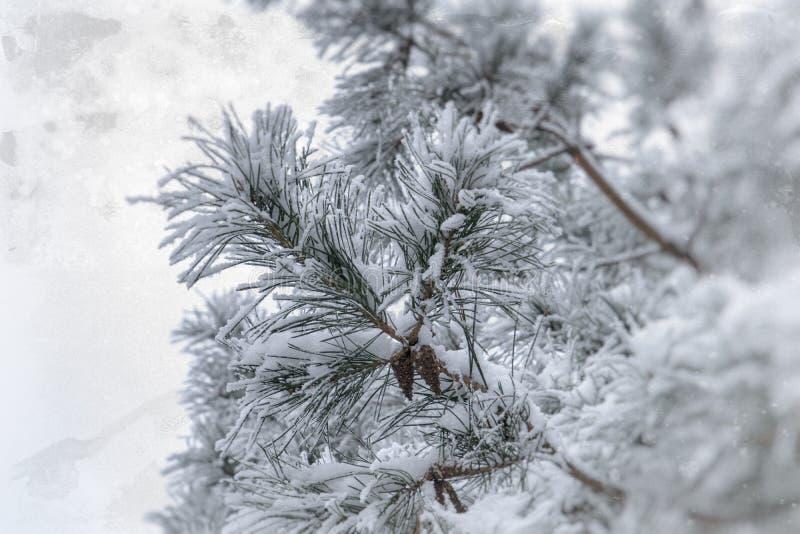 Zimy gałązka zakrywająca z białym świeżym śniegiem na zimnym dniu iglasty drzewo obraz stock