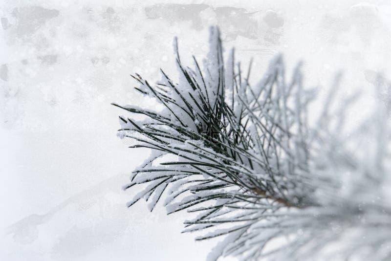 Zimy gałązka zakrywająca z białym świeżym śniegiem na zimnym dniu iglasty drzewo obraz royalty free