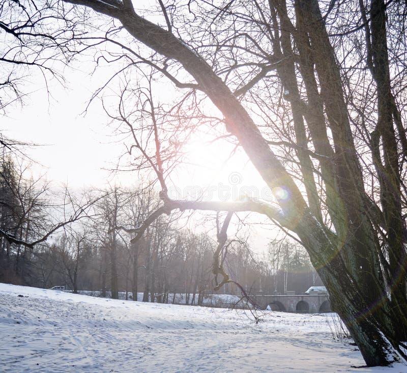 Zimy halizna w parku w słońcu Styczeń 33c krajobrazu Rosji zima ural temperatury zdjęcia royalty free